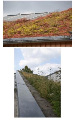 107....Eksempler på avslutning av grønt tak langs kanten av taket.
