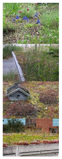 107....Eksempler på planter, og tak supplert med fuglekasser.